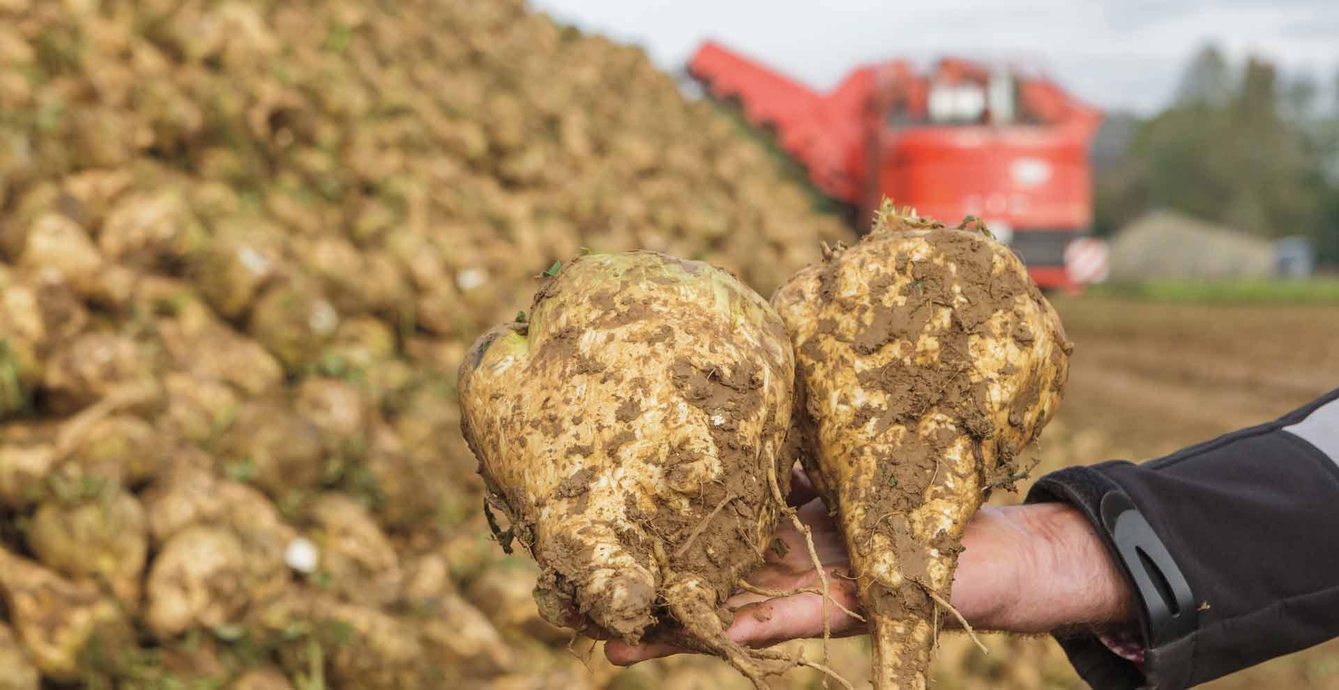 Agrifac LightTraxx beet harvesters